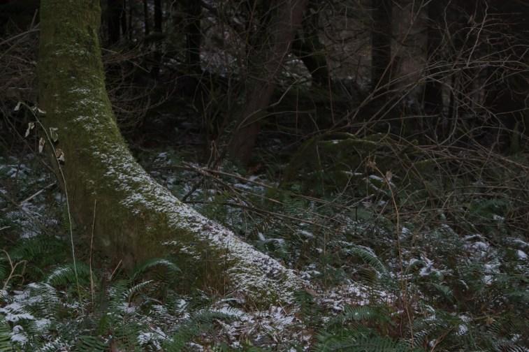Wintery forest scene