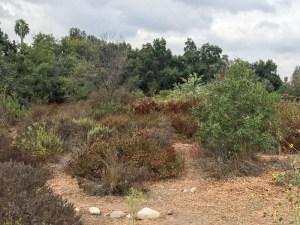 Autumn in South Pas Nature Park