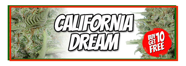 Buy California Dream Cannabis Seeds Australia