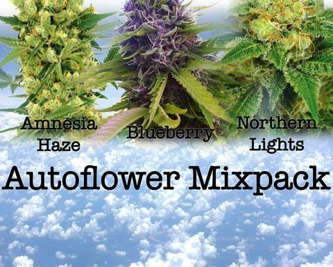 Auto-Flower Mixed Pack