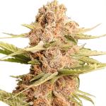 Cannabis Seed Bank NZ
