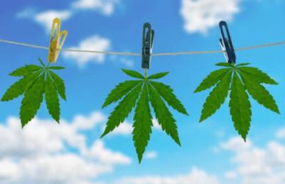air drying cannabis nz