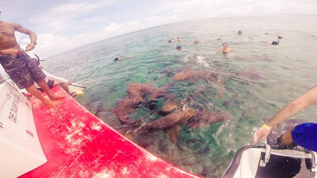 Shark Alley: Snorkelling in Caye Caulker