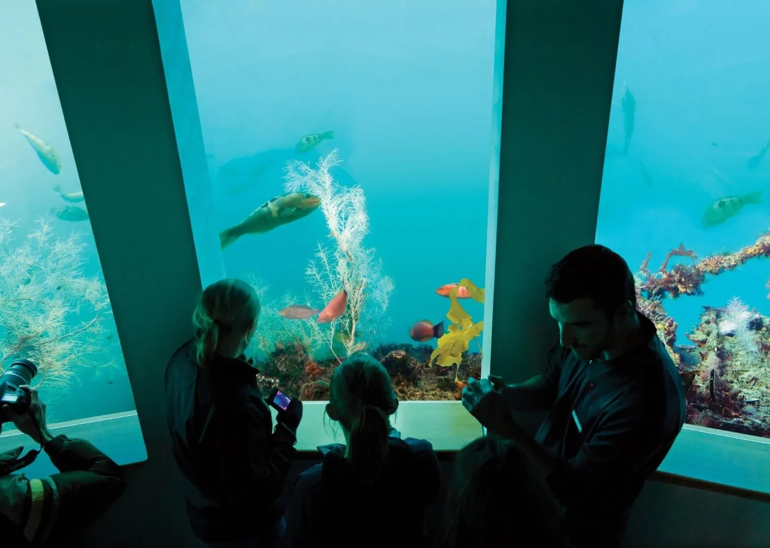 Family looking at various fish in Southern Discoveries' Underwater Observatory in Milford Sound New Zealand