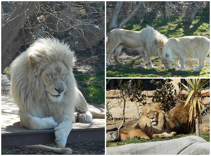 Canberra zoo jobs