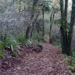 Revisiting Harvey Creek Trail