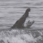 VIDEO: Crocodile eats large manta ray off of Tambor Beach
