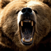featured-image-template-NL-bear
