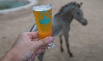 Brew at the Zoo 2019