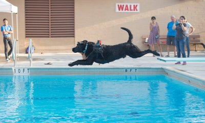 Dogs Invited to Take Over L.A. County Public Pools on Labor Day