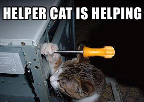 cats-fixing-computer-251110