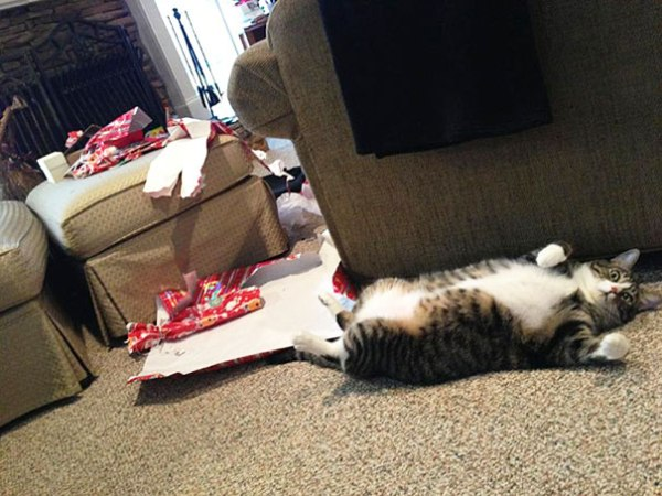 14-cats-and-dogs-that-destory-christmas-7