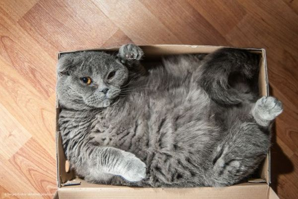 If you need me, I'll just be here in my box.