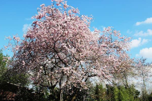 Der Lieblingsbaum