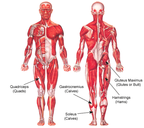 Weight Lifting: Legs (Squats, Deadlifts, Leg Press, Lunges, Etc.)