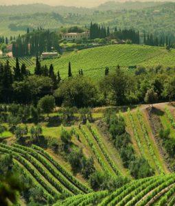 Sanfte Hügel: Das Markenzeichen der Toskana und des Weinguts Gagliole