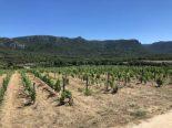 Weingüter auf Sardinien