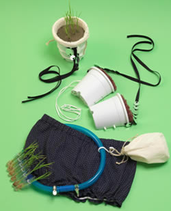 Rice Bra Components Sustainability 101: The Rice Bra picture