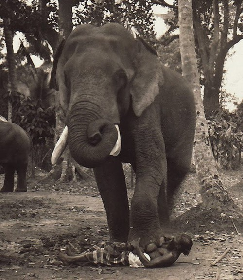 execution-by-elephant