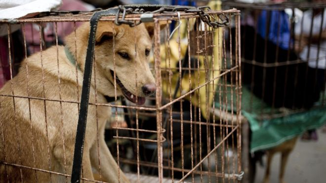 Lychee and Dog Meat Festival Yulin China