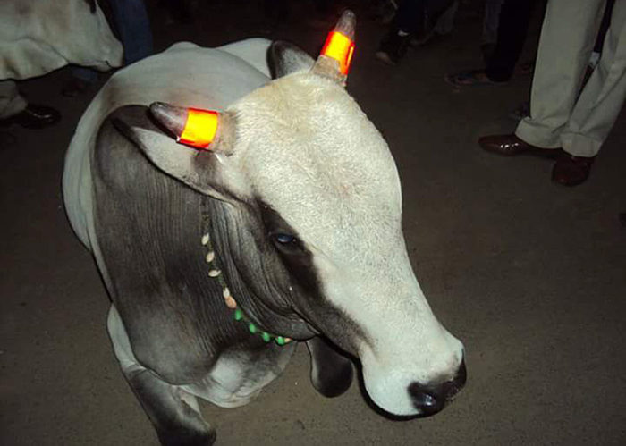 Indian Cow Glow-in-the-dark horn paint