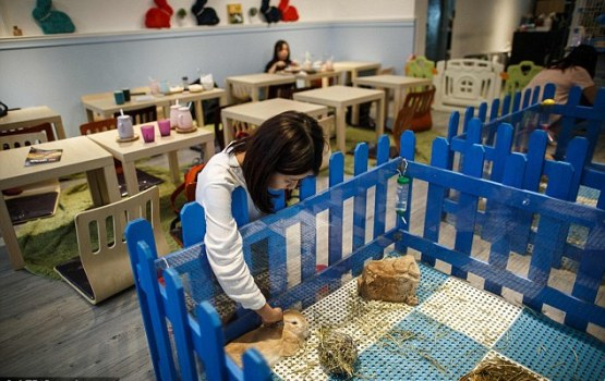 Rabbit Cafe Hops Into Hong Kong Spotlight