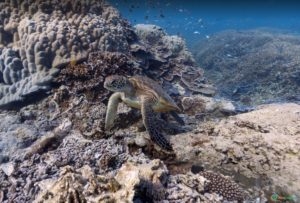 Heron Island – Great Barrier Reef, Australia