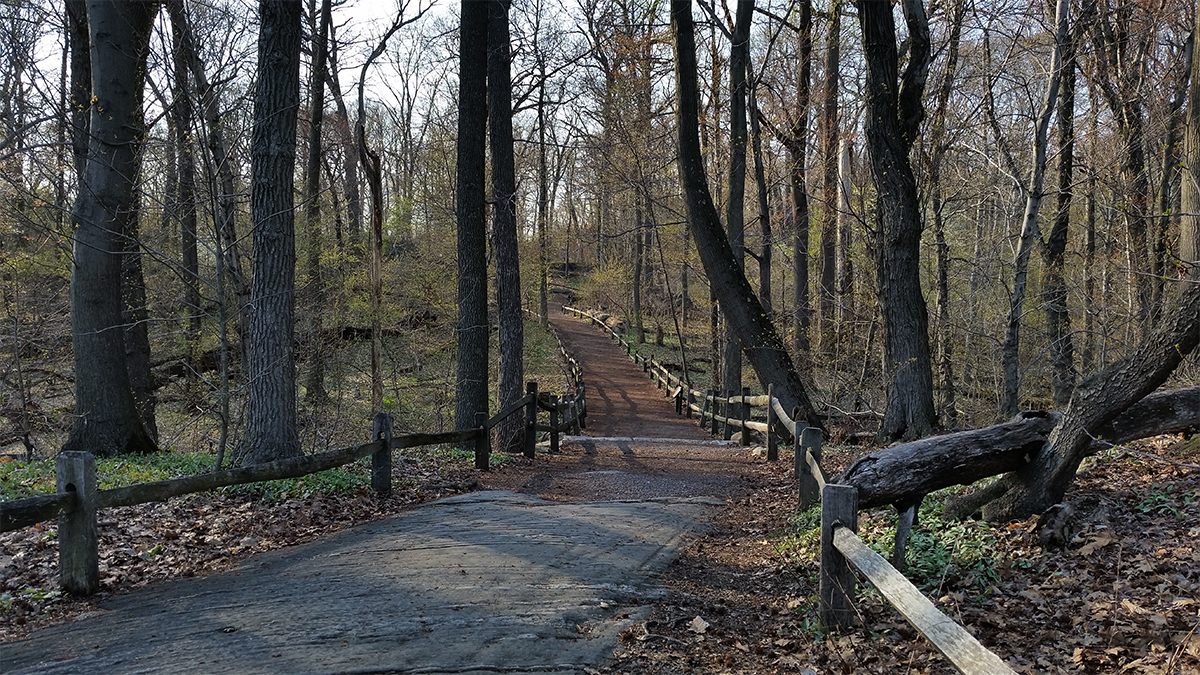 The Thain Family Forest at NYBG/©welcome2thebronx