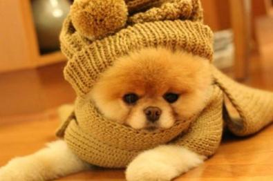 problemas-com-seu-pet-no-inverno