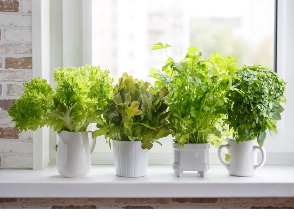 Pictures of a kitchen garden