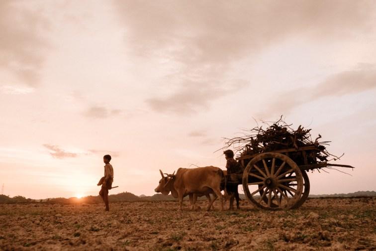 Farmer - Mrauk U Travel Photographer