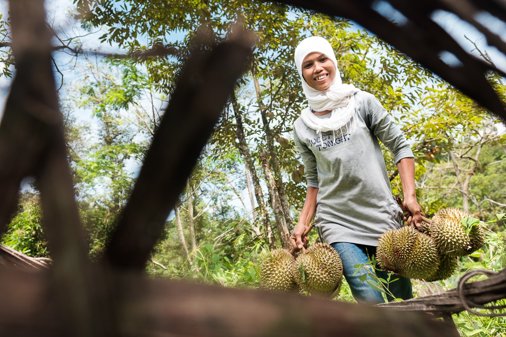 Collecting Durian - Editorial Photographer