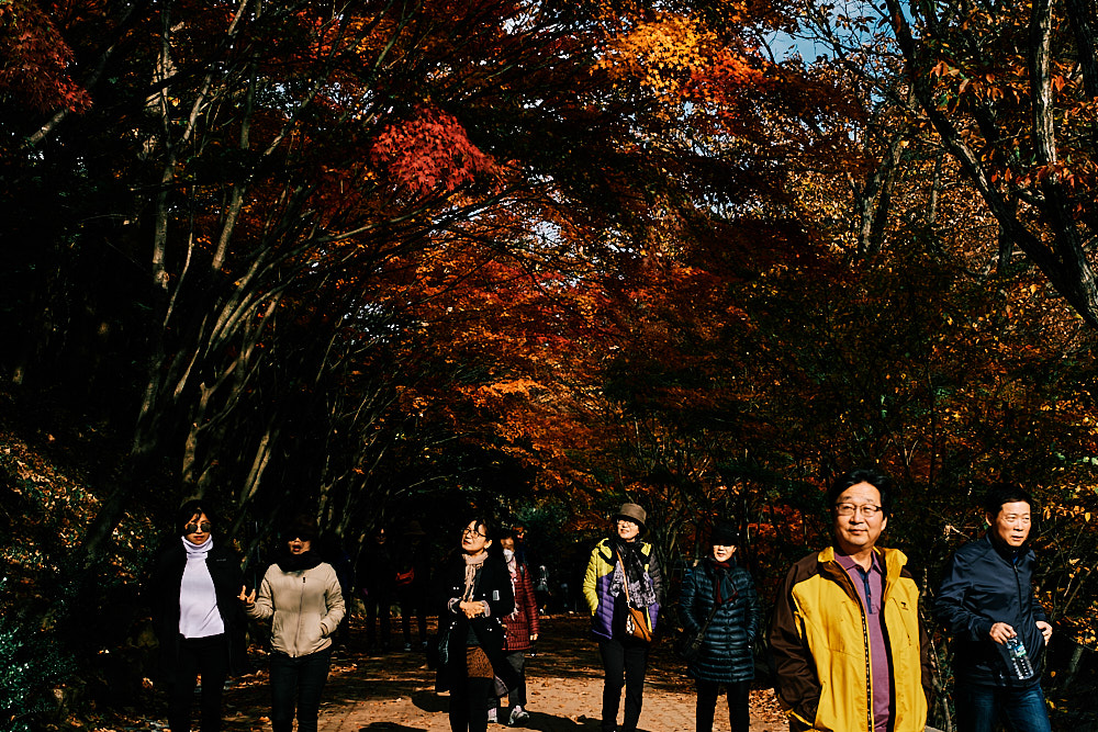 Visitors enjoy autumn, Gangcheonsan National Park, Sunchang Gochujang Village for Smile Magazine, Korea Editorial Photographer