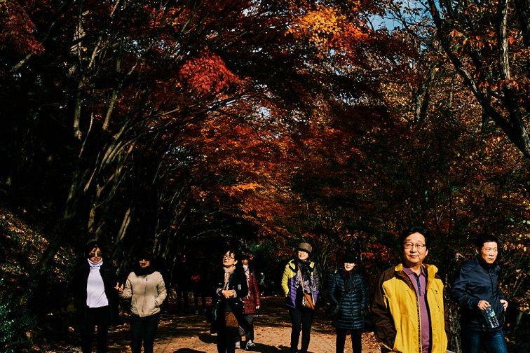 Visitors enjoy autumn, Gangcheonsan National Park, Sunchang Gochujang Village for Smile Magazine, Korea Editorial Photographer