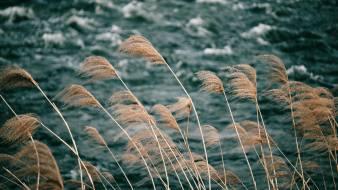 Stream and Grass