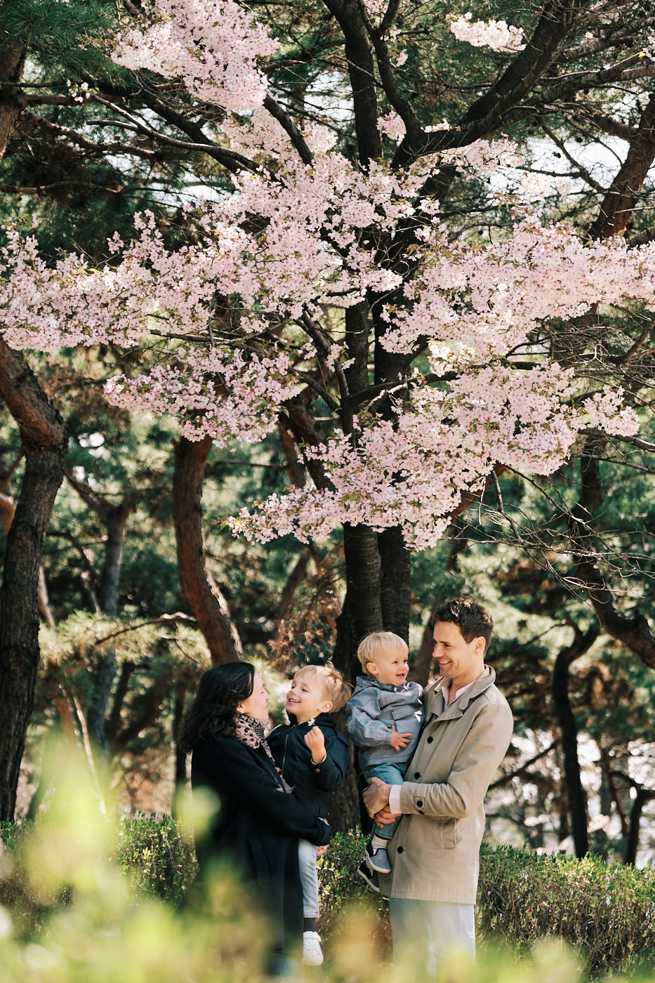 Family Photos with Cherry Blossoms in Seoul