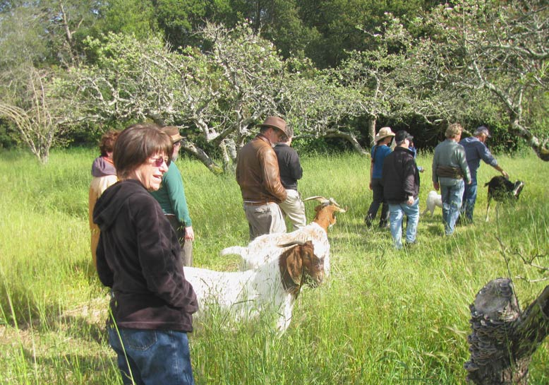 After visiting with the tegus, we escort the goats on an afternoon cruise through the ancient apple orchard.