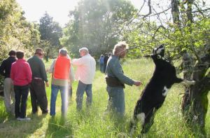 The goats don't get free range in the orchard because, given the chance, they'd strip the trees bare.