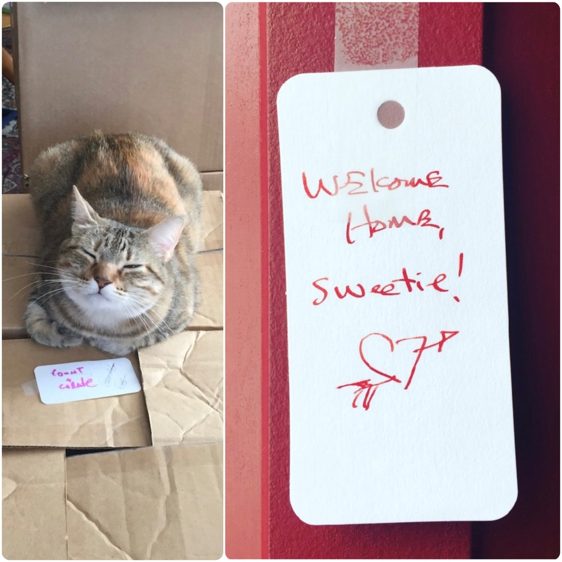 My Home Team: Lucy of Totality, cat of awesome and Bob's Welcome Home note