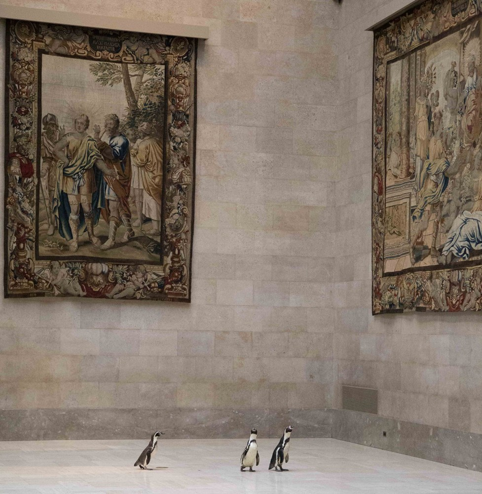 Penguins at the Nelson-Atkins