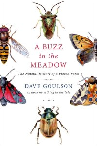 buzz in the meadow