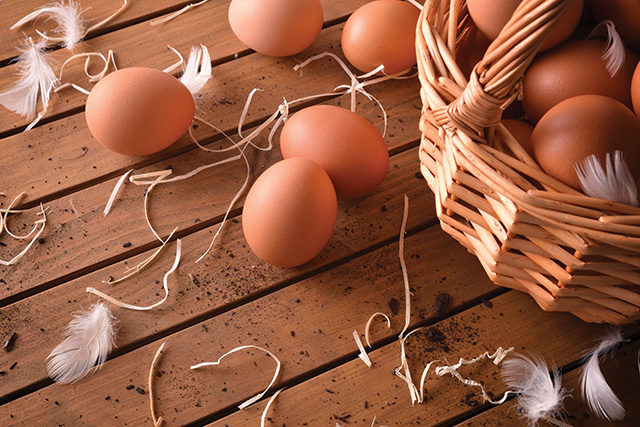 Freshly picked eggs in basket on wood table elevated view