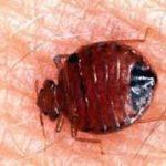 The Simple Bedbug Treatments