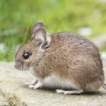 Pest Control Tips that You Should Know