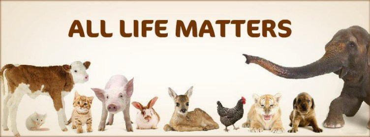 animal lover