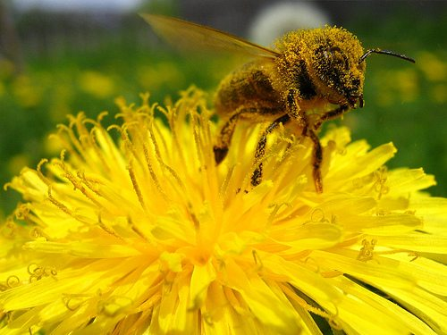Tales From The Hive – Honey a New Old Sugar Pill?