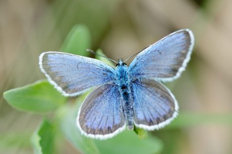 butterfly habitat day star montessori