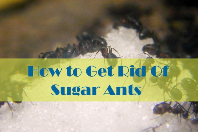 Eliminate Ants Naturally