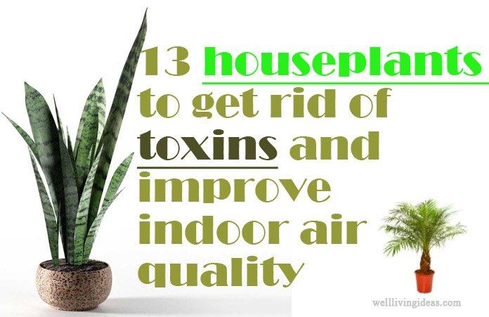 Indoor Plants Good Air