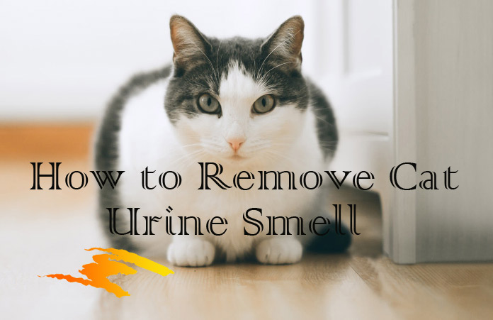 How To Clean Cat Urine From Carpet Pad Www Resnooze Com
